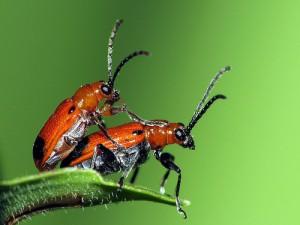 14.07.15 sexe insects plus de sexe dans son couple