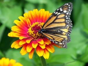15.06.05 papillon fleur