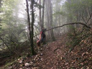 aventure en famille : Ysaline grimpe aux arbres